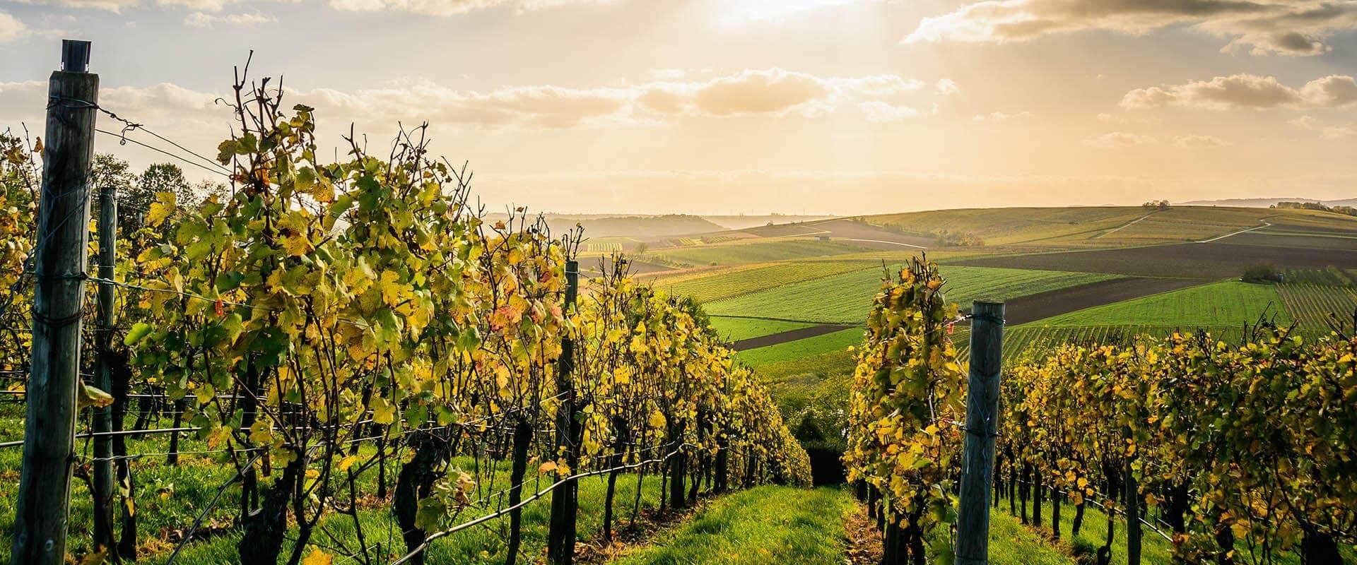 Vineyard Venues